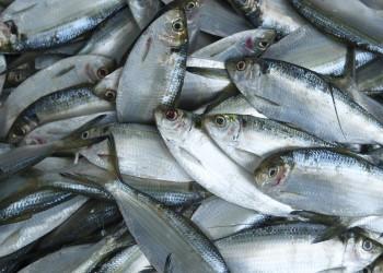 overfishing -fish