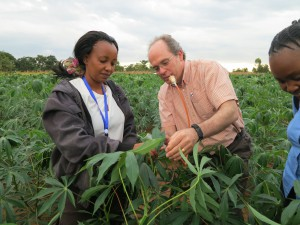 Professor John Colvin and PhD student Cathy Gwandu collect whitefly specimens in cassava field in central Malawi (credit: University of Greenwich)